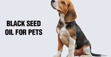 black seed oil for pets